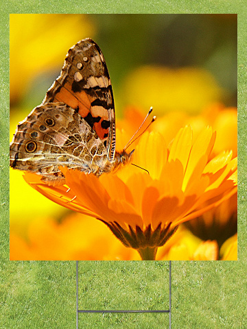 Butterfly on a Flower Lawn Sign 18x24