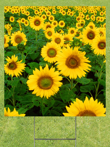 Sunflower Field Lawn Sign 18x24